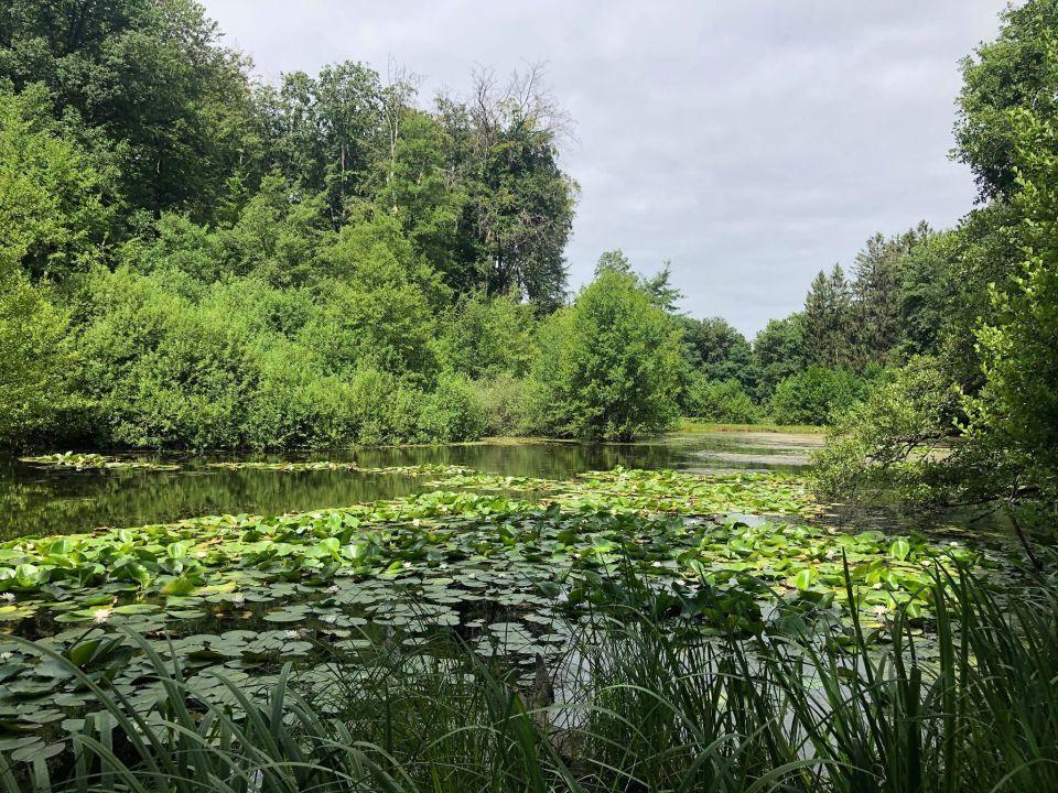 La balade des étangs en juillet (cliquez)