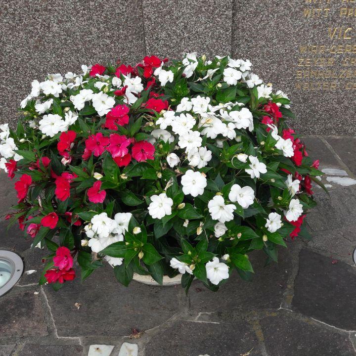 Les fleurs en juillet
