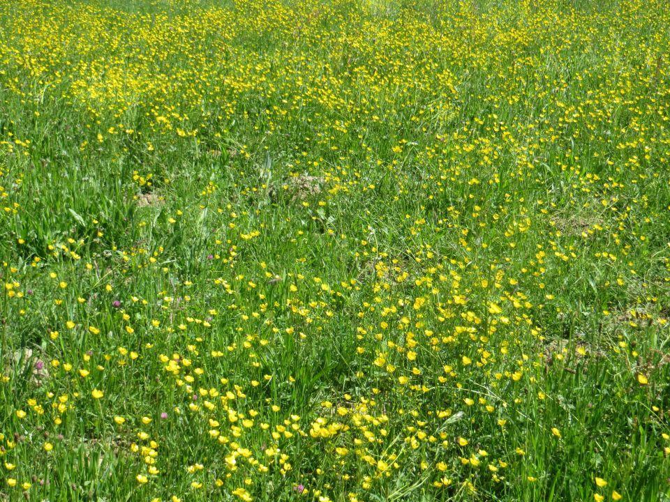 Fleurs des champs (cliquez sur la photo)