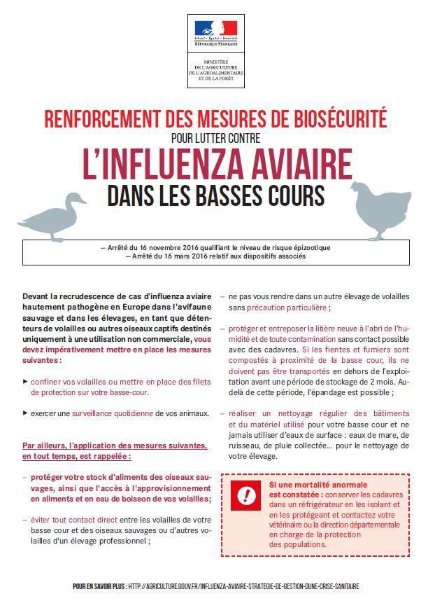 Grippe aviaire 1