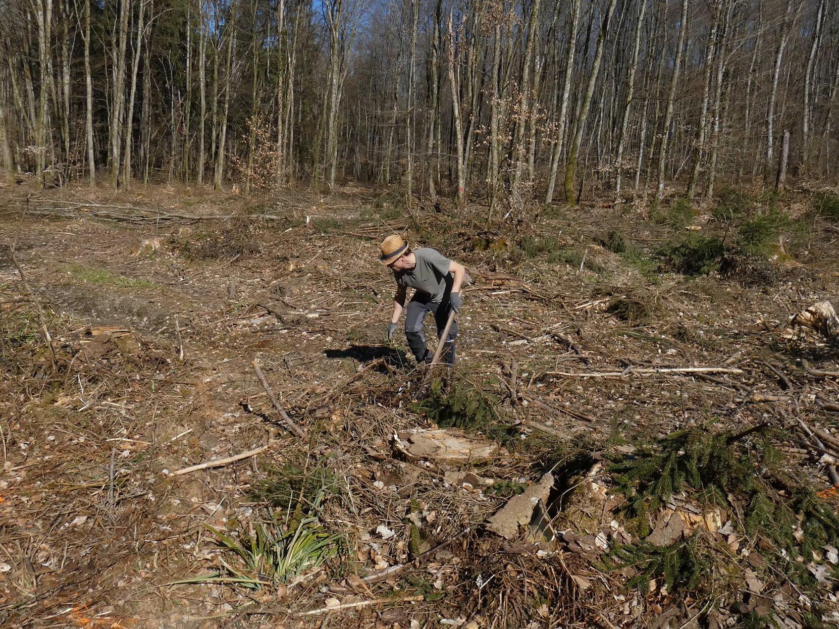 La replantation en forêt
